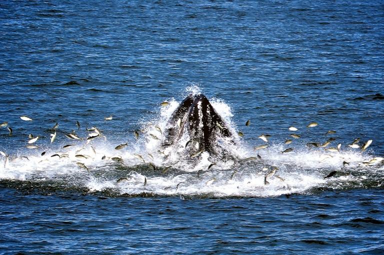 Whale watching near New York