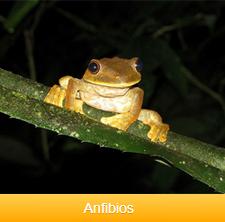 anfibios-ok