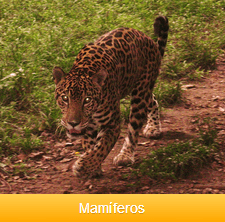 mamiferos-ok