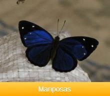 mariposas-ok