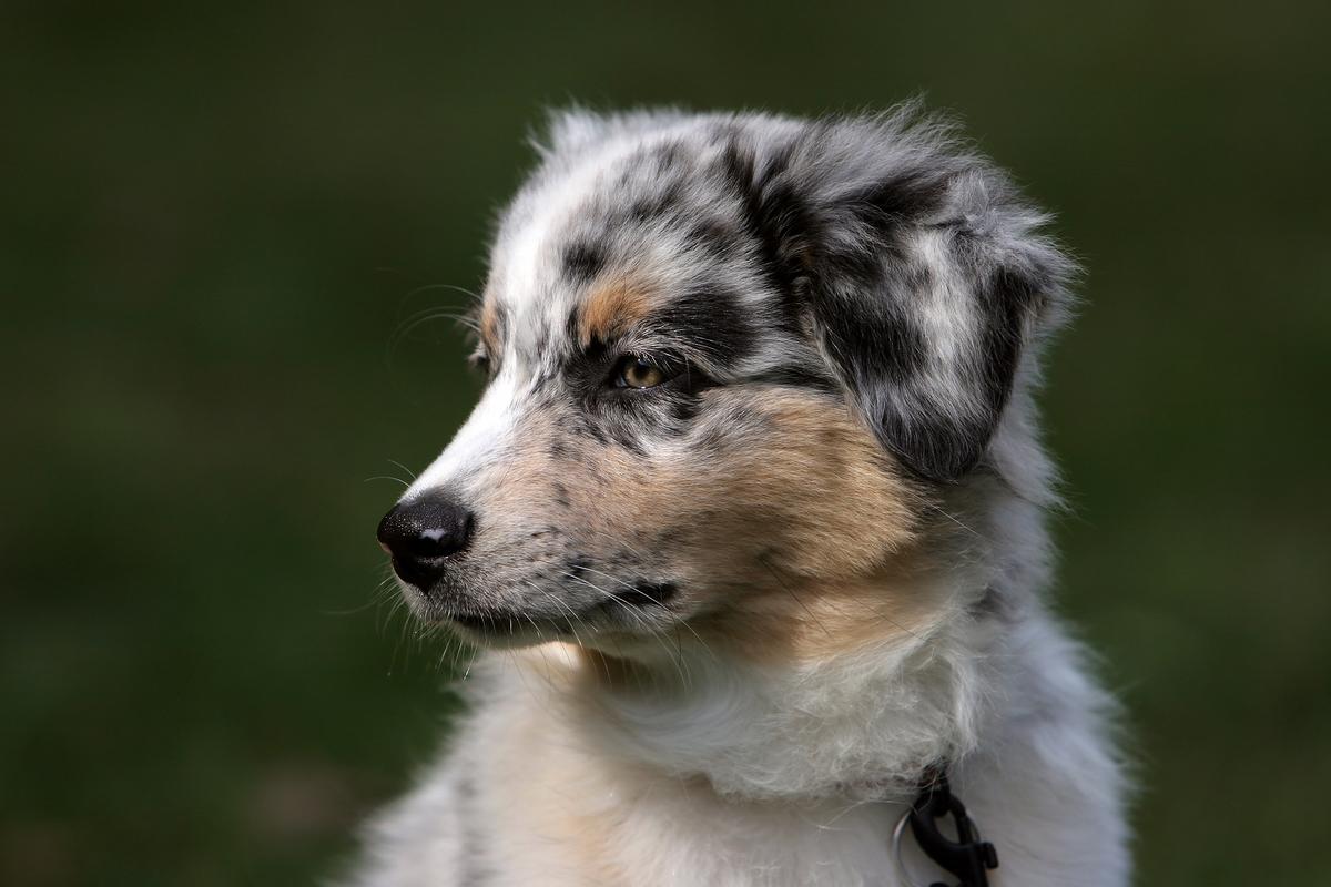 Fullsize Of Low Maintenance Dog Breeds