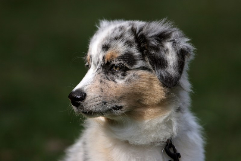 Large Of Low Maintenance Dog Breeds