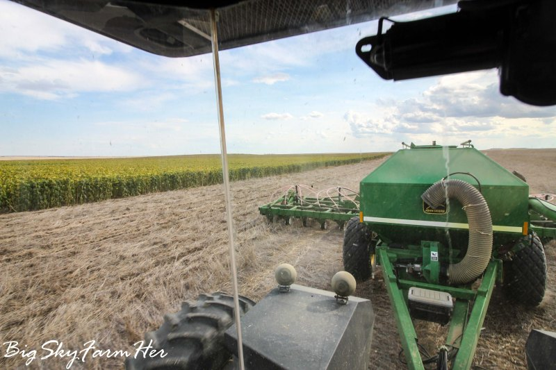 Large Of What Does Seeding Mean