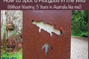 How to Spot a Platypus in the Wild