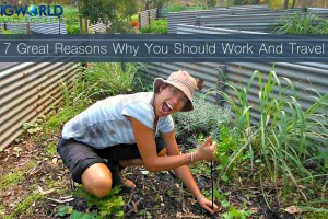 7 Great Reasons Why You Should Work And Travel