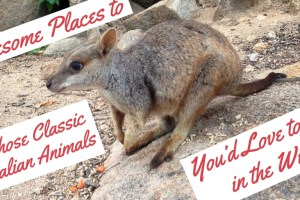 9 Awesome Places to Spot the Australian Animals You'd Love to See in the Wild