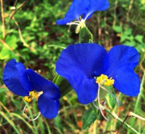 Beat Jet-Lag Texas-Trails-Flowers