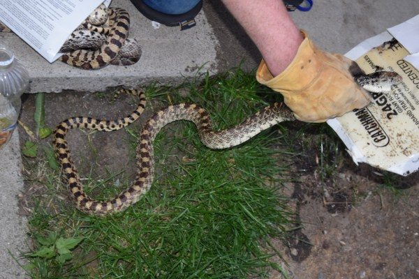 snake removal Eastern Montana