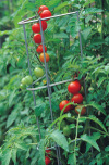 The Best Tomato Plant Stake