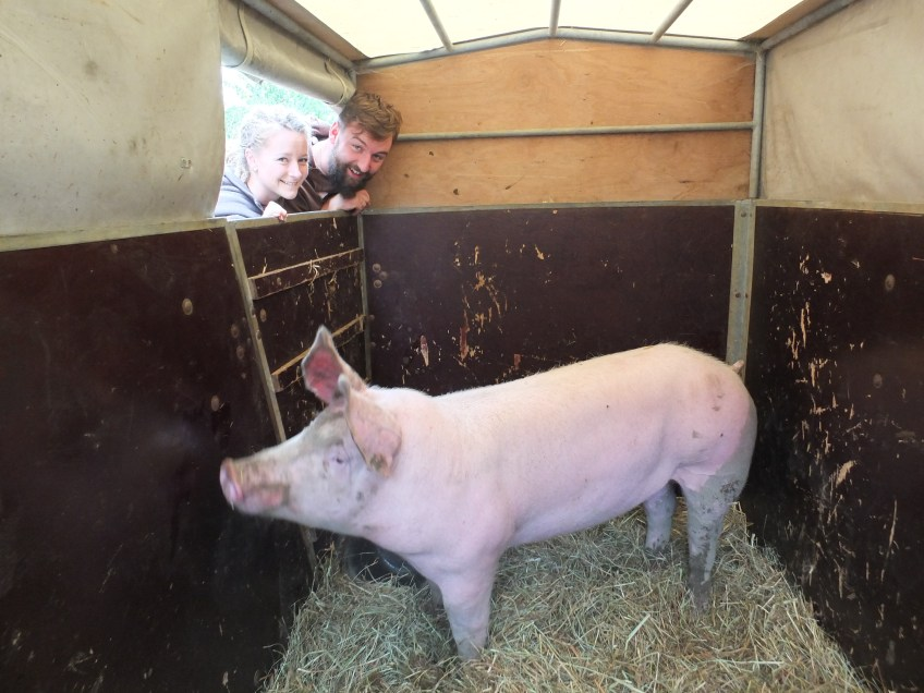 unser Schwein Rudi