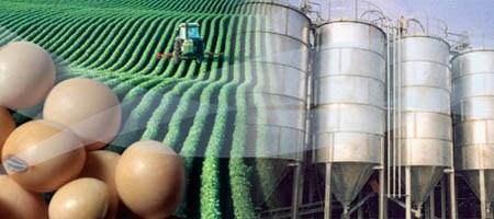 biodiesel etanol argentina bioindustria agroindustria