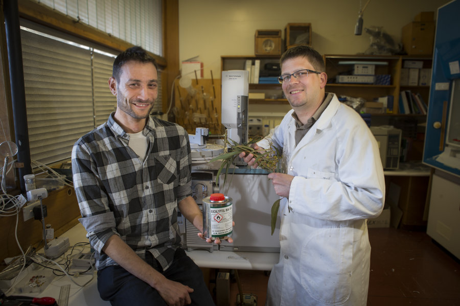 eucalyptus ethanol biodiesel biofuels australia