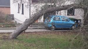 Februarorkan 2017 entwurzelter Baum