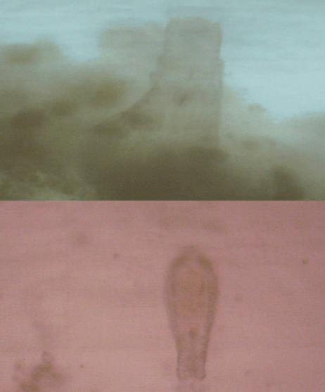 fot 2 Wielkie życie w kropli wody