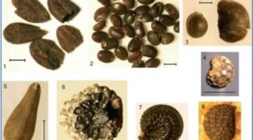 szczatki-makroskopowe-roslin
