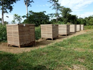 Shadehouses used to study light requirements of the azobe seedlings species