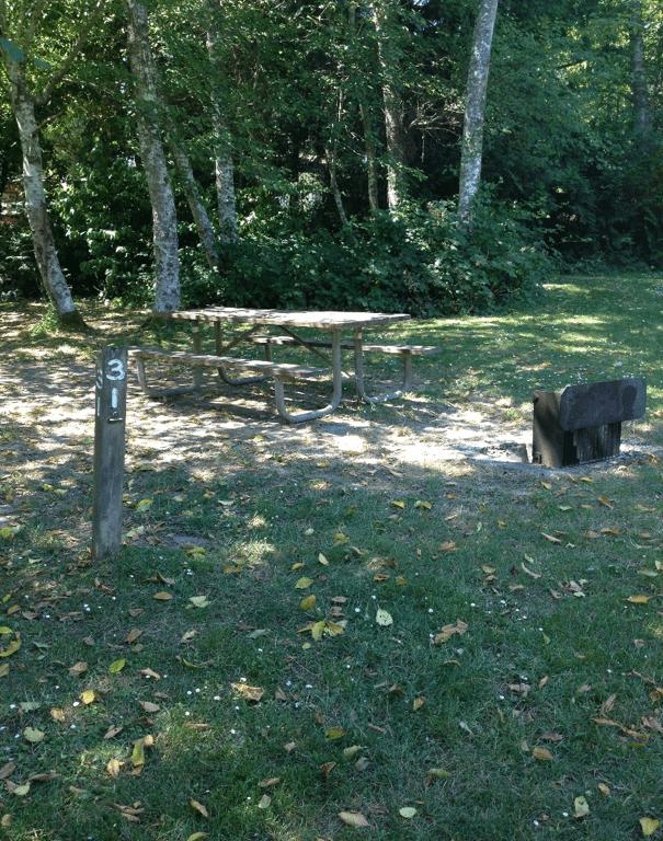 site31