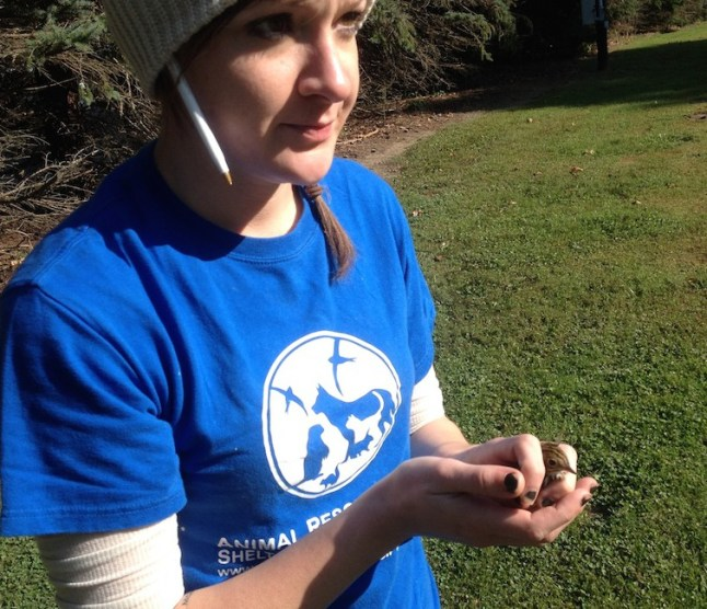 Bree Bigelow from the Animal Rescue League Shelter and Wildlife Center releases a rehabilitated Ovenbird.