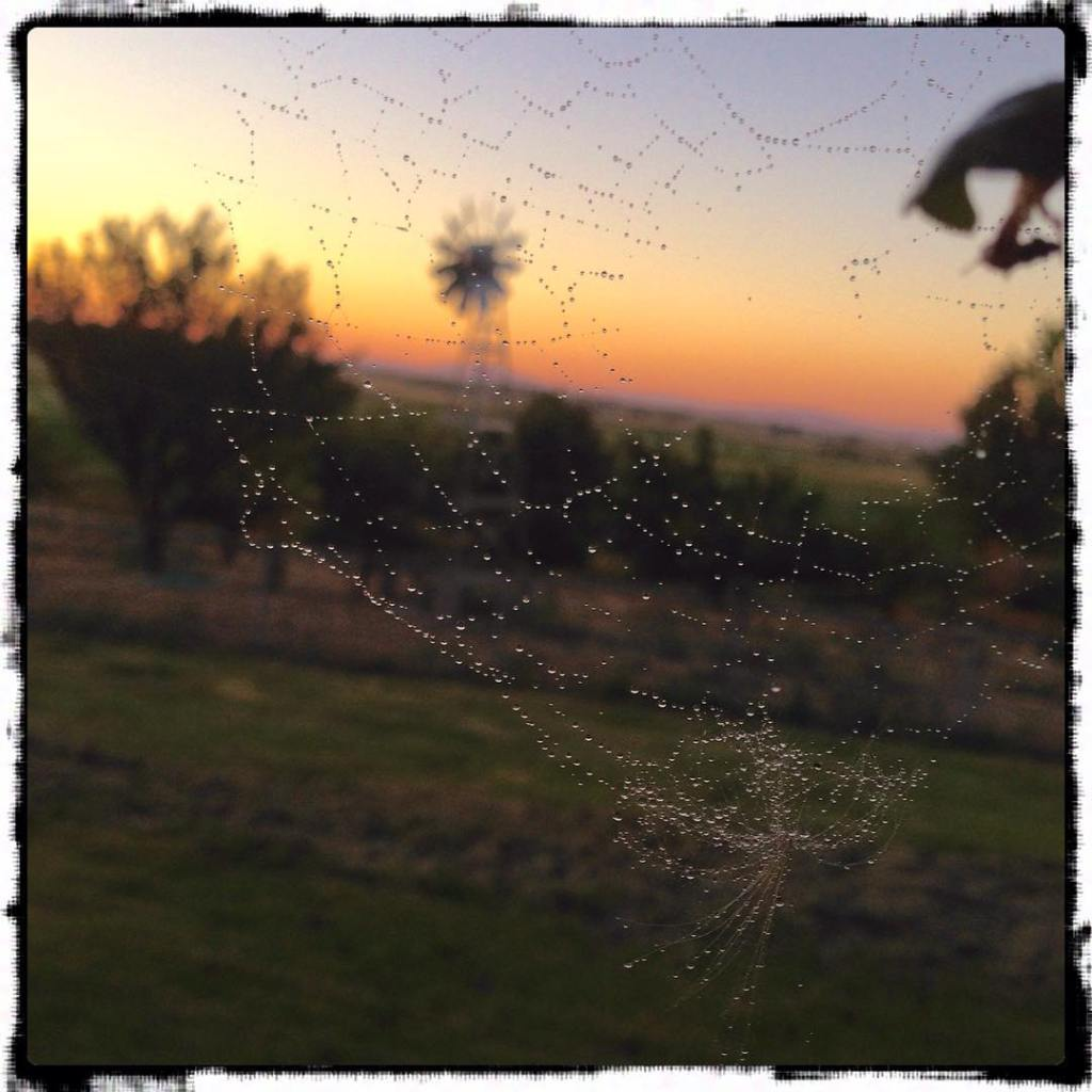 Discovered a spiderweb while watering the hanging baskets tonight countrylifehellip