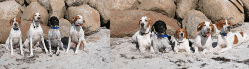 Massachusetts 2003 – 2004 - left to right: Garrett (5 months), Boone, Maya, and Oz.  Note that the Beagle did not feel her presence was required for the first picture (she was off doing Beagle things).  In the second picture, from left to right: Boone, Maya, Hopkins, Oz and Garrett.