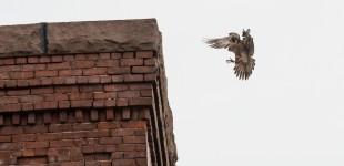 falcon_010619_2458
