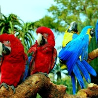 How long Do Parrots Live - Lifespan of Parrots