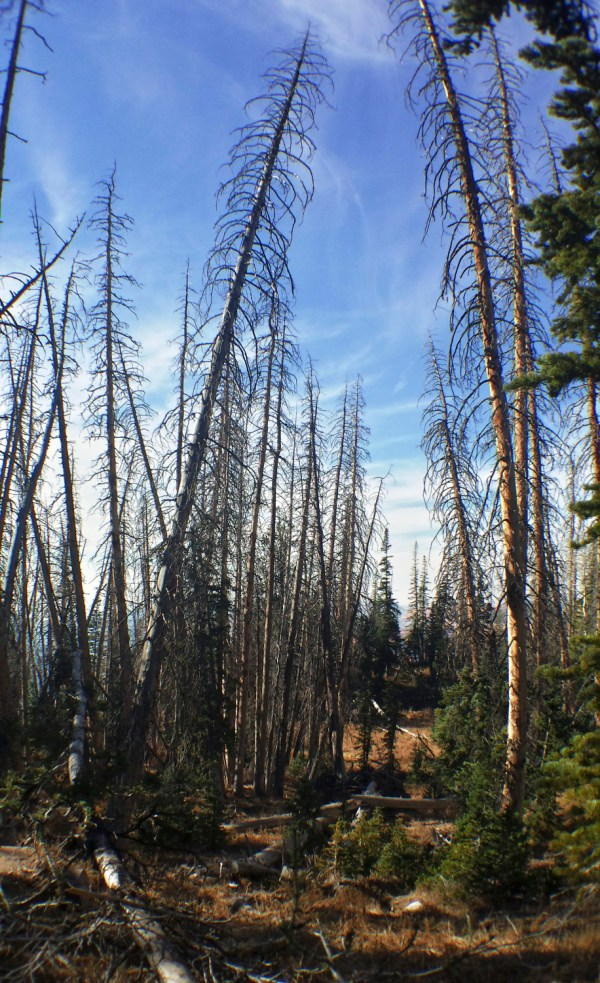 Subalpine Forest - Cedar Breaks National Monument | Bites of Life
