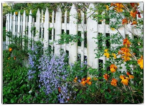 Love the flowers coming through the fence