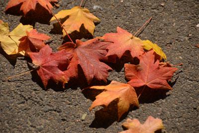 020_autumnleaves.jpg