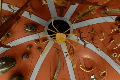 natural-history-museum-room-ceiling.jpg