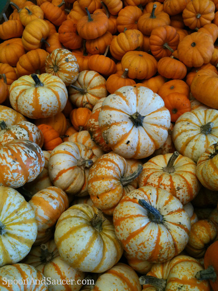 Miniature orange and white striped pumpkins