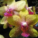 A cheerful orchid to brighten this chilly day.