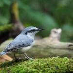 『さっぽろ野鳥観察手帖』で撮影した鳥を同定