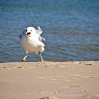 Seagulls Could Be The New Flying Plague!