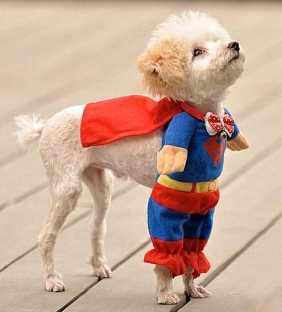 Cute-Pet-Costumes.001