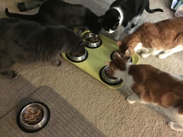 Cat Sitting Kitties