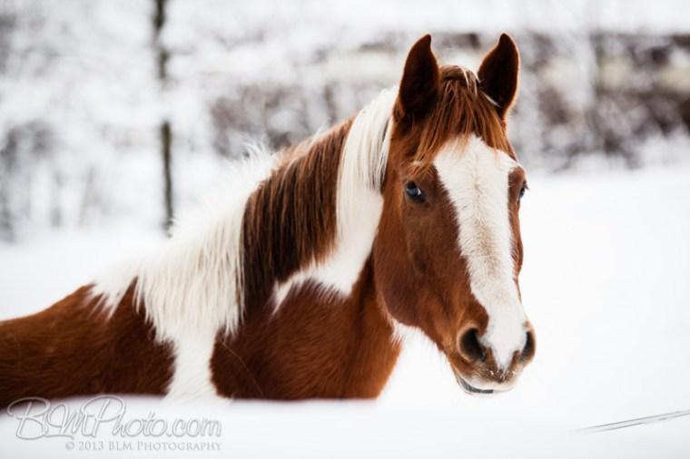 Kierstead-Horses-4954_PROOF