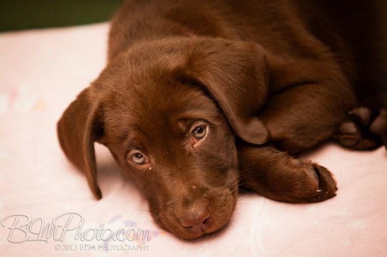 Webber-Dogs-5278