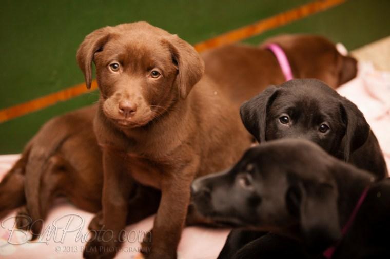 Webber-Dogs-5323