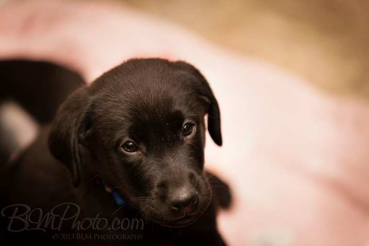 Webber-Dogs-5357