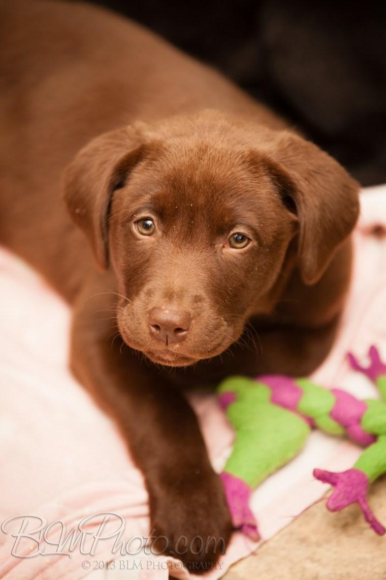 Webber-Dogs-5395