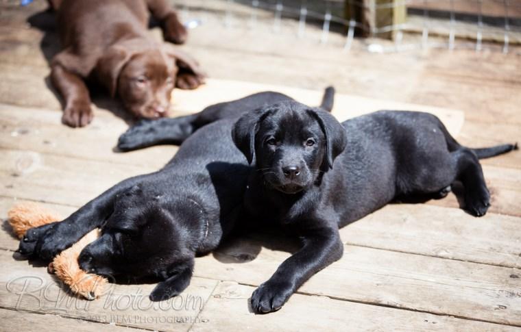 Webber-Dogs-5523