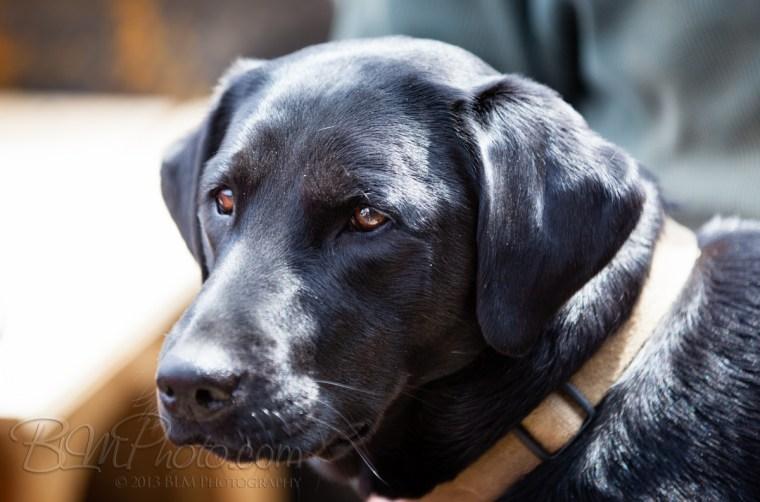 Webber-Dogs-5539