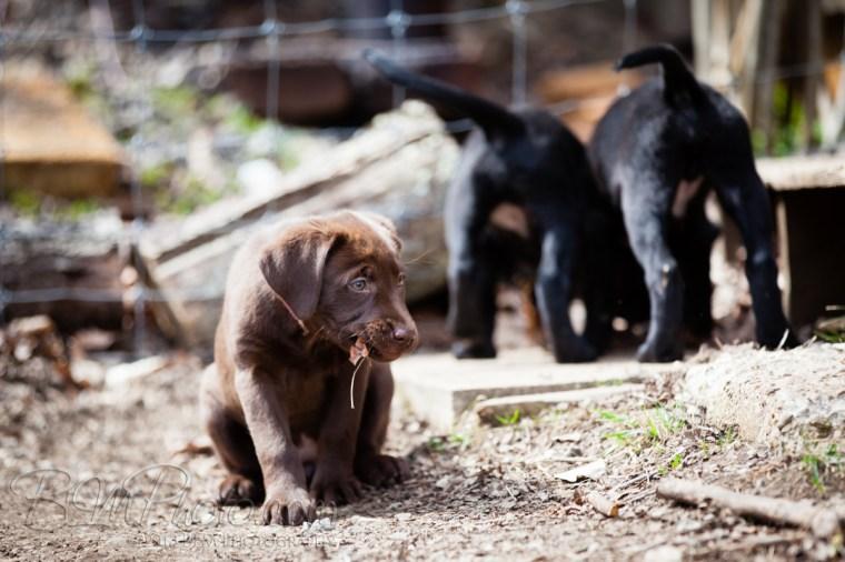 Webber-Dogs-5573