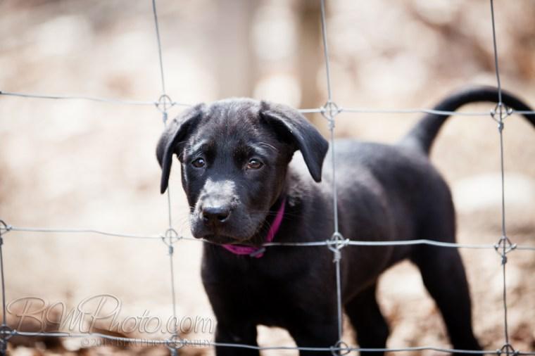 Webber-Dogs-5579