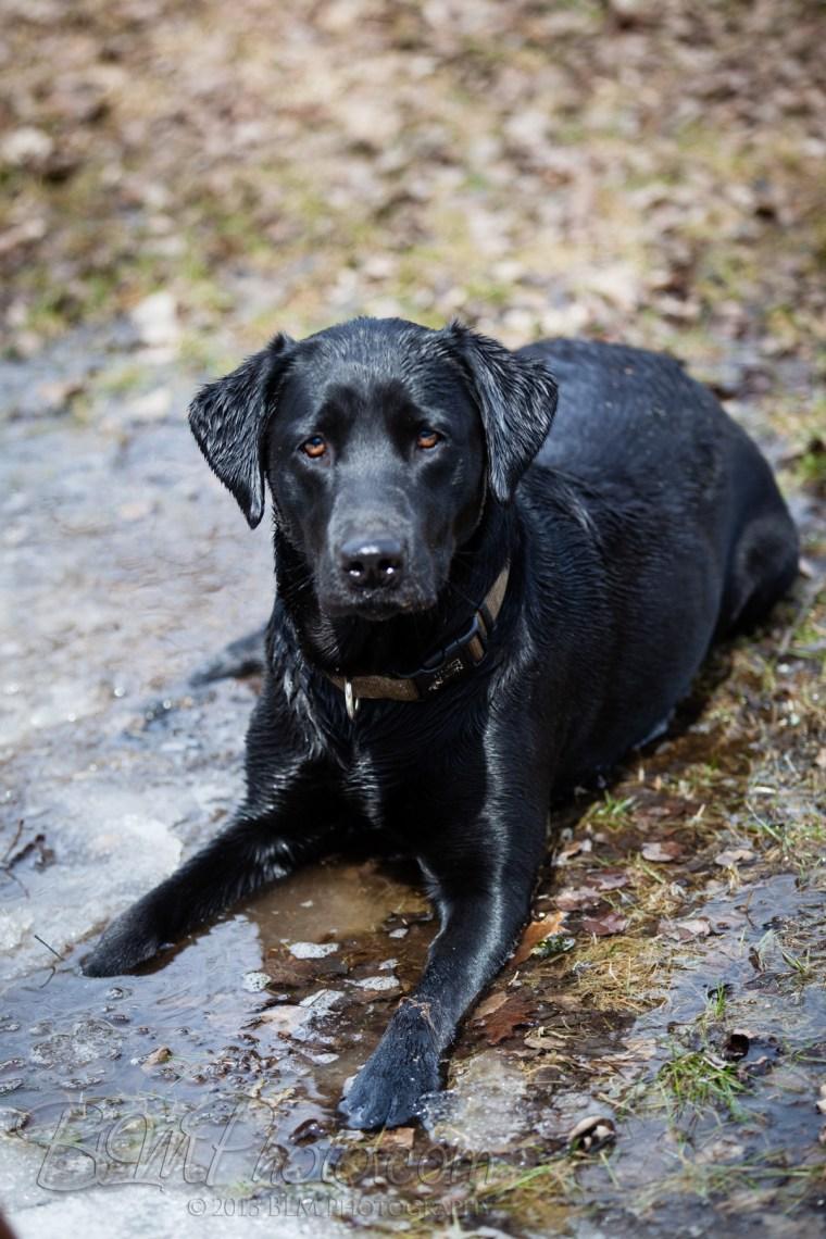 Webber-Dogs-5618