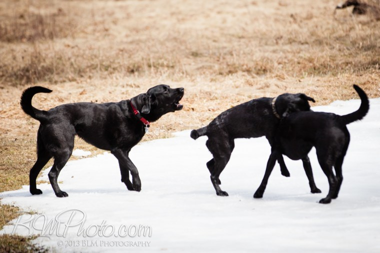 Webber-Dogs-5625