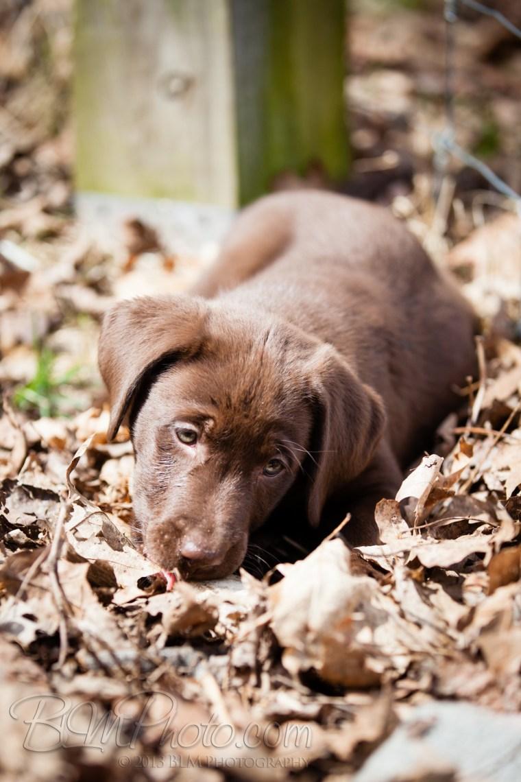 Webber-Dogs-5673