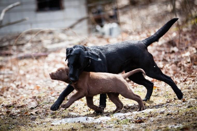 Webber-Dogs-5714