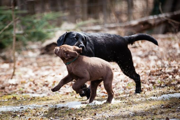 Webber-Dogs-5716